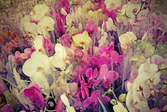 Colorful orchid types in florist shop with vintage effect Stock Images