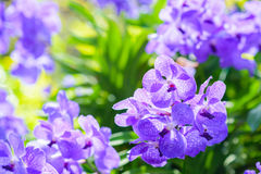 Colorful orchids. Vivid colorful orchids in the garden stock photos