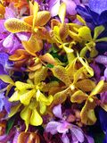 Colorful Orchids. Combination of colorful orchids, purple, yellow, orange, and blue Royalty Free Stock Photos