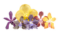 Colorful orchids Royalty Free Stock Images