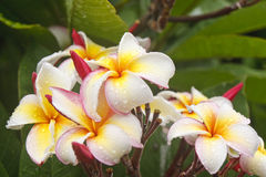 Colorful Orchids After Rain Stock Images