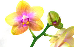 Colorful orchids Stock Photo