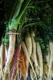 Colorful Organic Carrots Stock Photos