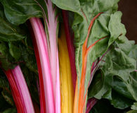 Colorful Organic Chard Stock Images