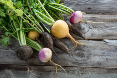 Colorful organic healthy black radishes and turnips for genuine gardening. Colorful organic healthy black radishes and turnips with fresh green tops and roots on Stock Photography