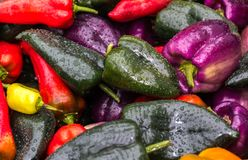Colorful organic peppers. Organic peppers for sale at farmers market Stock Photos