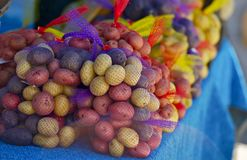 Colorful Organic Potatoes Stock Images
