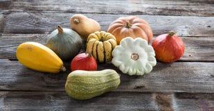 Colorful organic pumpkins, blue and kuri squashes and acorns Royalty Free Stock Images