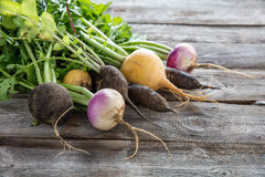 Colorful organic turnips and radishes on wood for genuine gardening Stock Photos