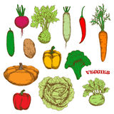 Colorful organically grown fresh vegetables sketch Royalty Free Stock Photography
