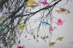 Colorful origami cranes Stock Photo