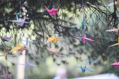 Colorful origami cranes Royalty Free Stock Photos