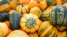 Colorful ornamental gourds, top view Stock Photo