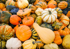Colorful ornamental gourds, top view Stock Image