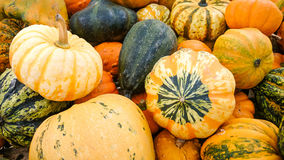 Colorful ornamental gourds, top view Stock Images