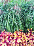 Colorful ornamental plants and grass Royalty Free Stock Photos