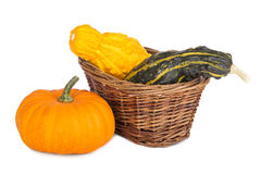 Colorful ornamental pumpkins and gourds in a basket. On white background Stock Photos