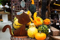 Colorful ornamental pumpkins, gourds and squashes in the market Royalty Free Stock Image