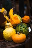 Colorful ornamental pumpkins, gourds and squashes in the market Royalty Free Stock Photos