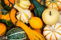 Colorful ornamental pumpkins, gourds and squashes in the market Royalty Free Stock Photography