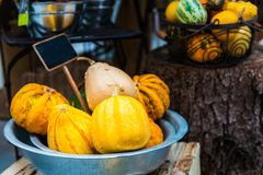 Colorful ornamental pumpkins, gourds and squashes in the market Stock Images