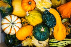 Colorful ornamental pumpkins, gourds and squashes in the market Stock Photo
