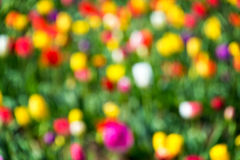 Colorful Out of Focus Background Stock Images