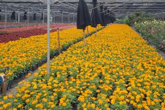 Colorful outdoor flower breeding base view stock image