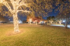 Colorful outdoor holiday tree lights and fall foliage at public royalty free stock photos