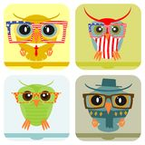 Colorful owl. Icon or banner with hipster owl isolated on a white background. Vector Stock Photos