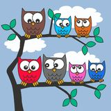 Colorful owls. Sitting in a tree Stock Images