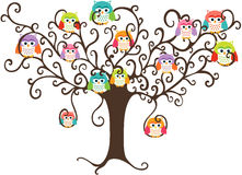Colorful owls in pretty tree Stock Photos