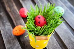 Colorful painted Easter egg on a fresh green grass Stock Images