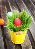 Colorful painted Easter egg on a fresh green grass Stock Image