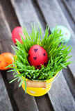 Colorful painted Easter egg on a fresh green grass Stock Photography
