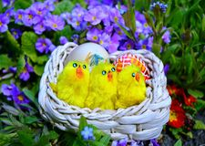Colorful painted easter eggs on a basket on a green grass royalty free stock image