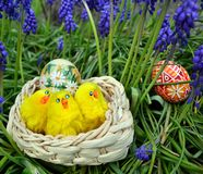 Colorful painted easter eggs on a basket on a green grass royalty free stock images