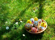Colorful painted easter eggs and little sheep on a green grass stock photos
