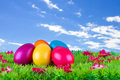 Colorful painted easter eggs located on a meadow with flowers Royalty Free Stock Photos