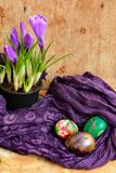 Easter still life with colored eggs and flowers Crocus Royalty Free Stock Images