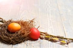 Colorful painted eggs in bird nest on wooden background, easter Royalty Free Stock Images