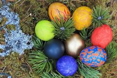 Painted eggs decorated in the moss. royalty free stock images