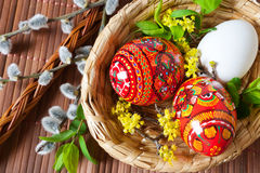 Colorful painted red eggs in wicker nest with pussycats and dogwood flower. Royalty Free Stock Image