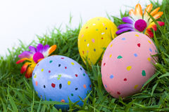 Colorful painted three easter eggs. On the grass with flowers Stock Photos