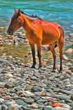 Colorful painting of brown horse on mountain river Royalty Free Stock Photo