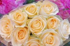Colorful pale roses top view, natural background. Colorful pale roses bouquets top view close up, natural background stock photos