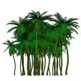 Colorful palm Royalty Free Stock Image