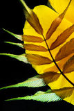 Colorful palm leaf arrangement royalty free stock photos