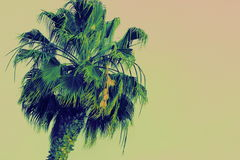Colorful Palm Tree. Evokes a tropical theme Stock Photos