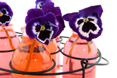 Colorful Pansies Royalty Free Stock Image
